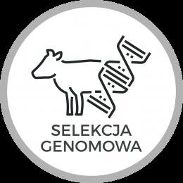 Wykorzystaj genomową ocenę jałówek – korzystaj z doświadczenia innych!