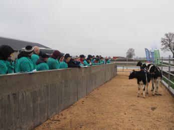 Optymalizuj pracę hodowlaną w stadzie bydła mlecznego
